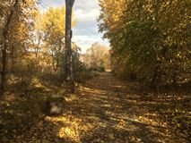 Scenic fall walk at the park stock photography