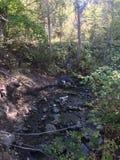 Scenic fall walk at Peterson creek Royalty Free Stock Image
