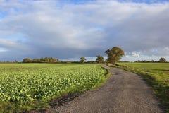 Scenic farm track Royalty Free Stock Photo