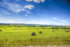 Scenic Farmland. Farmland landscapes from the foothills of Alberta Canada in summer Stock Photo