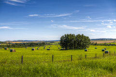 Scenic Farmland. Farmland landscapes from the foothills of Alberta Canada in summer Royalty Free Stock Photography