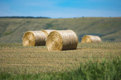 Scenic Farmland Royalty Free Stock Images