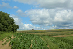 Scenic Farmland Stock Image