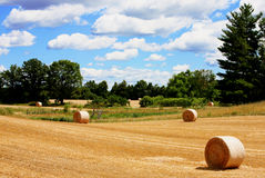 Scenic Field. Of wheat being harvested into round bales of straw royalty free stock images
