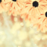 Scenic floral border blurred background, flowers Royalty Free Stock Image