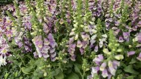 Scenic Flower Garden stock footage