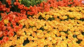 Scenic Flower Garden stock video footage