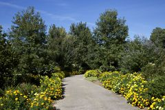 Scenic foot path lined with yellow marigolds Royalty Free Stock Photo