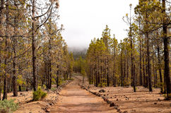 Scenic footpath in the forest Royalty Free Stock Photo