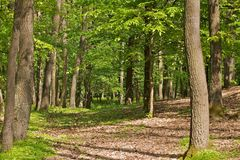 Scenic forest Stock Images