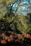 Scenic forest. Scenic view of trees in countryside forest royalty free stock photography