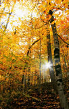 Scenic forest in autumn Royalty Free Stock Image