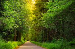 Scenic forest drive. Scenic drive through lush green forest in Washington state Stock Photos