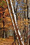 Scenic Forest in Indiana Royalty Free Stock Image