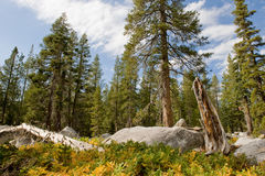 Scenic forest landscape Royalty Free Stock Images
