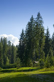 Scenic Forest Meadow royalty free stock photo