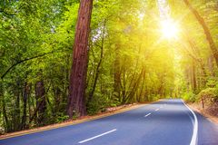Scenic Forest Road Royalty Free Stock Photos