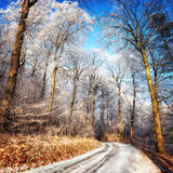 Scenic forest road in winter. With snow and hoarfrost on the trees and clear blue sky Stock Image