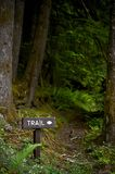 Scenic Forest Trail Royalty Free Stock Photos