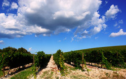 Scenic French vineyard Royalty Free Stock Images