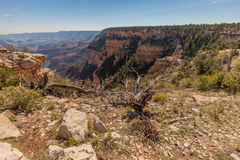 Scenic Grand Canyon South Rim Stock Photography