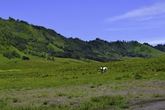 Scenic Green grass field view of rolling countryside green farm fields with horse royalty free stock photography