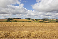 Scenic harvest landscape Stock Photo