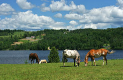 Scenic Horse Farm Royalty Free Stock Images