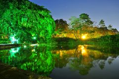Scenic illuminated trees with reflection on pond Royalty Free Stock Image