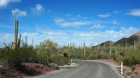 Scenic inside the Arizona-Sonora Desert Museum. The Arizona-Sonora Desert Museum is a 98-acre (40 ha) zoo, aquarium, botanical garden, natural history museum Stock Photos