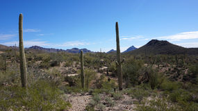 Scenic inside the Arizona-Sonora Desert Museum. The Arizona-Sonora Desert Museum is a 98-acre (40 ha) zoo, aquarium, botanical garden, natural history museum Royalty Free Stock Image
