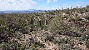Scenic inside the Arizona-Sonora Desert Museum Stock Images