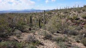 Scenic inside the Arizona-Sonora Desert Museum. The Arizona-Sonora Desert Museum is a 98-acre (40 ha) zoo, aquarium, botanical garden, natural history museum Stock Images