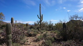 Scenic inside the Arizona-Sonora Desert Museum Stock Photo