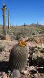 Scenic inside the Arizona-Sonora Desert Museum Stock Photography