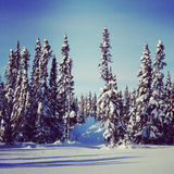 Scenic instagram of trees covered in snow in winter Stock Photography