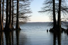 Scenic lake. A scenic lake at sunrise  with cypress trees in the water Royalty Free Stock Image