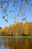 Scenic lake and autumn forest royalty free stock images