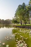 Scenic lake in park on summer day. Wonderful green woods. Amazing landscape stock photos