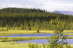 Scenic lake and pine forest Stock Photography