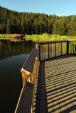 Scenic Lake Wood Deck Stock Image