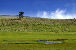 Scenic landscape Royalty Free Stock Images