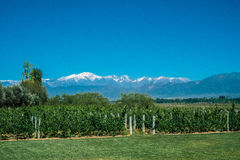 Scenic Landscape with Andes Mountains with Snow and Vineyard on royalty free stock image
