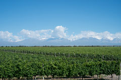 Scenic Landscape with Andes Mountains with Snow and Vineyard on Stock Photo