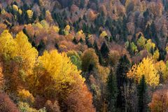 Scenic landscape with bright mountain forest in autumn stock images