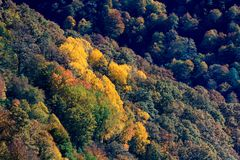 Scenic landscape with bright mountain forest in autumn royalty free stock image