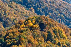 Scenic landscape with bright mountain forest in autumn royalty free stock photography