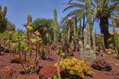 Scenic landscape with cactus plants on the island of fuerteventura in the atlantic ocean royalty free stock image