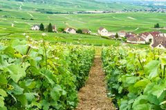 Scenic landscape in the Champagne royalty free stock photography