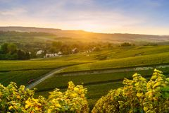 Scenic landscape in the Champagne at sunrise time, Vineyards in the Montagne de Reims. France Stock Image